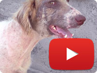 Update 2 on a rescued stray dog with major health and skin issues - Ahoo