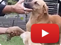 Rescuing a stray dog with smashed arm due to an accident - Arshin