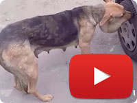 Rescuing a stray dog who was suffered of her owner - Mona