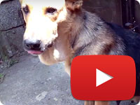 Update 1 on a rescued stray dog who was suffered of her owner - Mona
