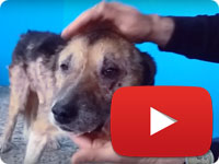 Rescuing a senior dog - old man