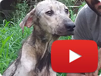 Update on a rescued stray dog with skin diseases - Homa
